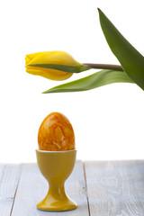 gelbe Tulpe und Ei