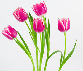 Five pink and white tulips