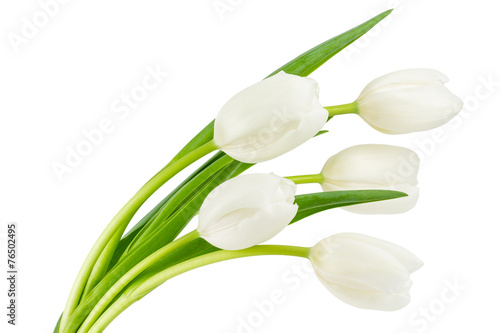Tuinposter Tulp White tulips isolated on white
