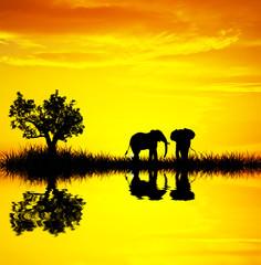 el amanecer tiñe de dorado el paisaje