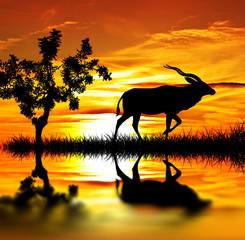amanecer en el monte de africa