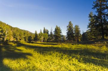 Shady meadow