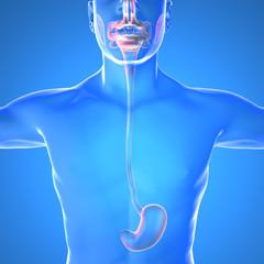 Stomaco bruciore dolore corpo umano anatomia