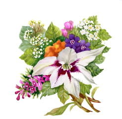 Beautiful watercolor clematis flowers illustration on white back