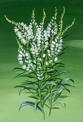 Beautiful watercolor white flowers illustration on green backgro