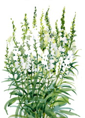 Beautiful watercolor white flowers illustration on white backgro