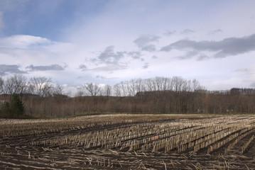 耕作前の畑