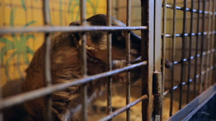 Animal shelter, raccoon, coati