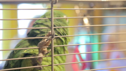 Animal shelter, parrot in a cage