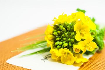 菜の花とスケッチブック
