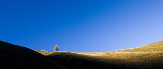 Panorama di collina con albero