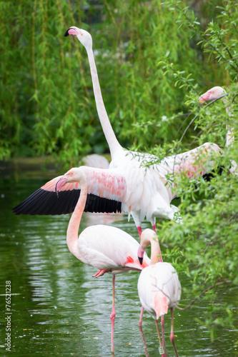 Foto op Aluminium Flamingo Pink flamingos