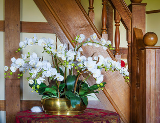 Orchid indoors