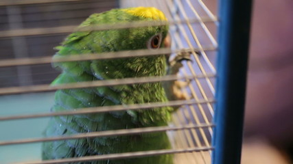 Animal shelter, parrot lives in a cage