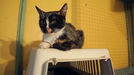 Animal shelter, cat invalid without one eye