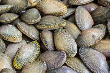 Closeup fresh raw Surf clam background.