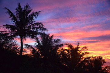 Colorful sunset with palm trees
