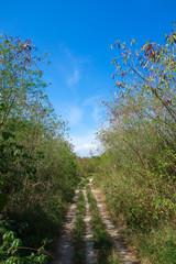 沖縄県 黒島の道