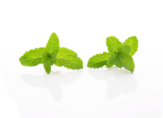 mint leaf with stem on white background