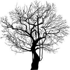 bare winter tree silhouette isolated on white