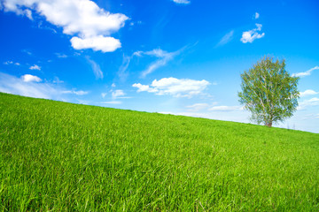 spring landscape with a one only  tree in the field