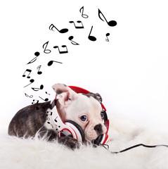 musikalischer Welpe
