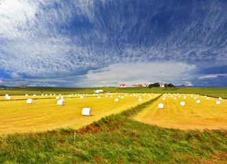 Rural pastoral after harvesting.