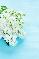 White lilac on a blue background
