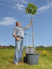 Man with oak tree