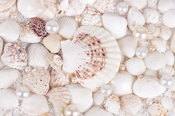 background of sea shells with pearls