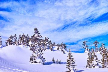 志賀高原横手山の樹氷