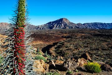 Vulkan Teide und Lavagestein auf Teneriffa