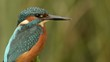 Kingfisher sitting on a branch