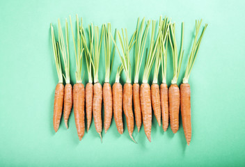 fresh organic carrots in a row on the green background