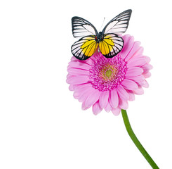 Schmetterling auf rosa Gerbera