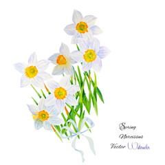 Background with Narcissuses
