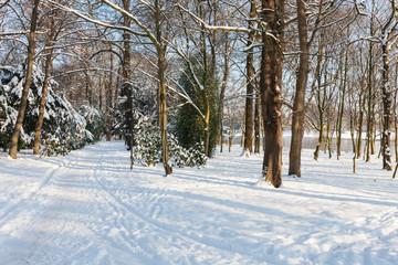 Parklandschaft im Winter