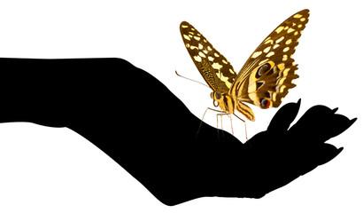 papillon, symbole d'immortalité sur main noire