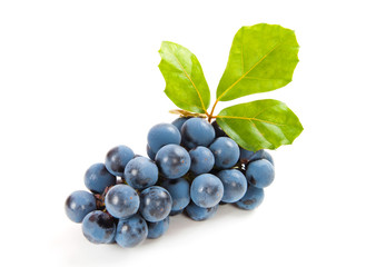 blue grapes with leaf on white background