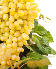 yellow wine grape with leaf on white background