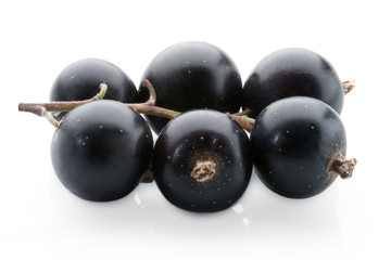black currant on white background - studio shot fruits ready for