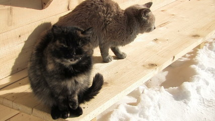Two cats are freezing in the cold -35 degrees Celsius