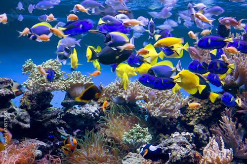 Fototapeta Аквариум с рыбками