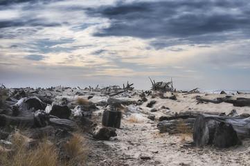 Driftwood Littered Beach