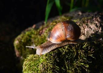 Snail resting on a stump