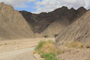 Eilat desert