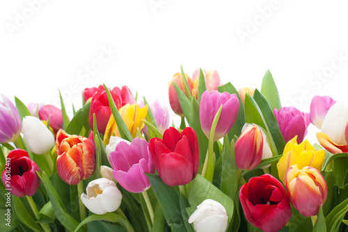 Foto op Plexiglas Tulp Spring tulips