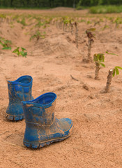 Pair of dirty boots covered in mud in cassava farm