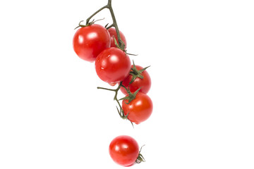branch of ripe juicy tomatoes
