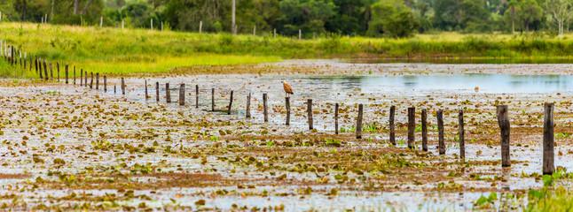 Wetland in Pantanal, Brazil